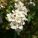 white flower by David owens