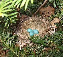 Robin Eggs by persnicketier10