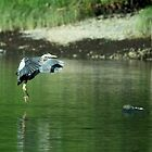 Great Blue Heron 3 by Alex Weeks