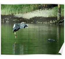 Great Blue Heron 3 Poster