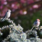 Meet the Finches by Paul Gitto