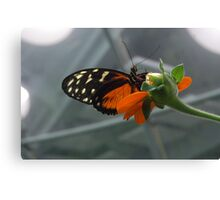 Nature's Cycle Canvas Print