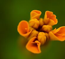 Orange Candy. by Sherstin Schwartz
