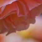 Soft Treasure by Lozzar Flowers & Art