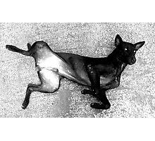 Faithful black & white Photographic Print