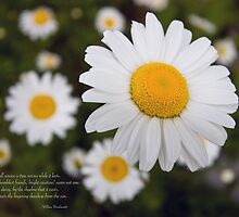 Constellation of Daisies by Jan Cartwright
