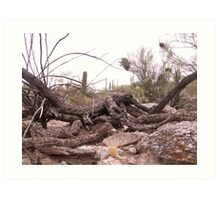 Desert Shambles Art Print