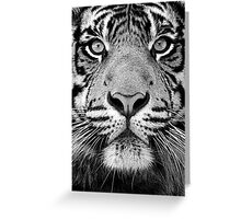 Sumatran tiger [ Panthera tigris sumatrae ] Greeting Card