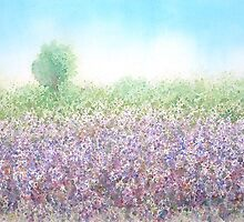 Lavender field by Carl Conway