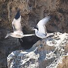 Tern Dispute by kalaryder