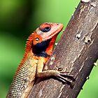 Red Lizard in Nepal by Paul Golz