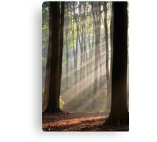 Sun rays in misty morning Canvas Print