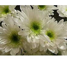 Chrysanthemums Photographic Print