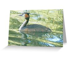 A Greater Crested Grebe Greeting Card