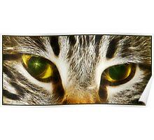 Tigress eyes Poster