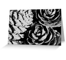 pine cones b&w Greeting Card