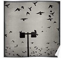 Revenge of the Birds Poster