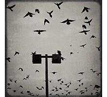 Revenge of the Birds Photographic Print