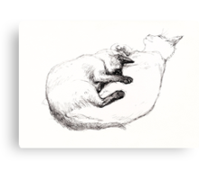 Two Loving Cats Canvas Print