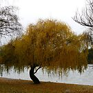 Lake Wakatipu, Queenstown NZ by Magee