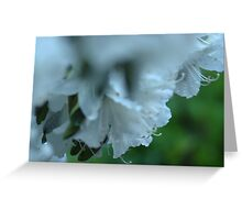 Azalea Droplets Greeting Card