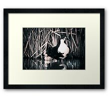 Mama and Her Babies... Framed Print