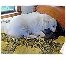 """Sylvie """"Naps on Her Own Blanket"""" © 2008 Poster"""