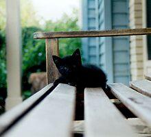 Artemis - Kitten Years by rakastajatar