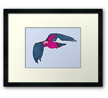 Galah in flight Framed Print