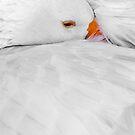 Duckeye by fauselr