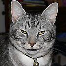I am Not amused! by Sandra Chung