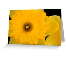 Tweety Bird Greeting Card