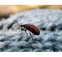 macro bug Photographic Print