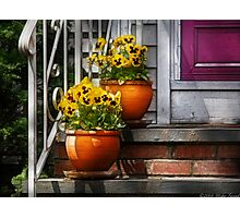 Pots of Pansies Photographic Print