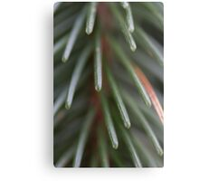 pine in the forest Metal Print