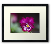 violet in autumn Framed Print