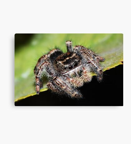 Jumper Canvas Print