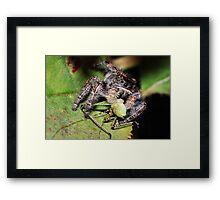 Jumper VS Hopper Framed Print