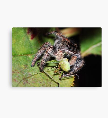Jumper VS Hopper Canvas Print