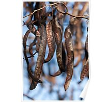locust tree Poster