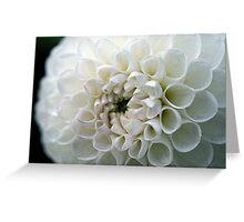 Dahlia in white Greeting Card