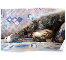 Sleeping Beauty Poster
