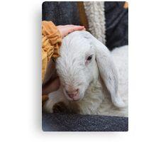 lamb with shepherd Canvas Print
