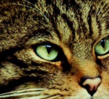 Scottish Wildcat close up Sticker