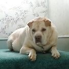Maxie in October 2011 by BarbBarcikKeith