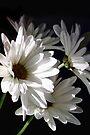 ♫ ♪ Daisy, Daisy...♪ ♫ by AuntDot