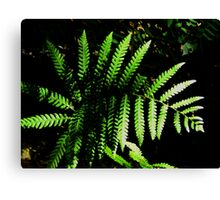 A Fern Grows.... Canvas Print
