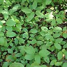 Undergrowth by Marmadas
