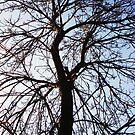 Up A Tree by Marmadas