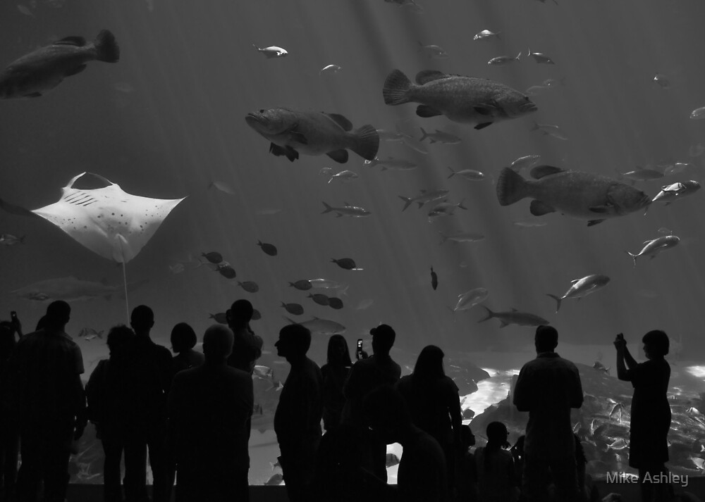 4 Groupers and a Manta (B&W) by Christian Eccleston